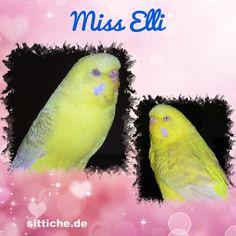 Miss Elli - die Freundliche - Wellensittich Forum und Galerie fuer Wellensittich-Freunde Freundlich, Parrot, Animals, Budgies, Friends, Parrot Bird, Animales, Animaux, Animal