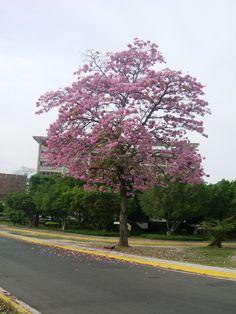 APAMATE  Av. Las Delicias, sector Concejo Municipal de Girardot, Maracay - Estado Aragua - Venezuela