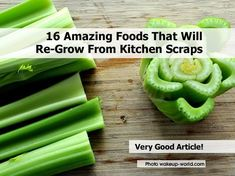 Gettin' Our Skinny On!: 16 Amazing Foods That Will Re-Grow From Kitchen Sc...