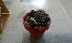 Kaktus z kamenů