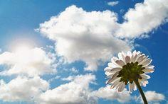 Blog da Beki Bassan - Reflexões: Sabedoria Da Vida