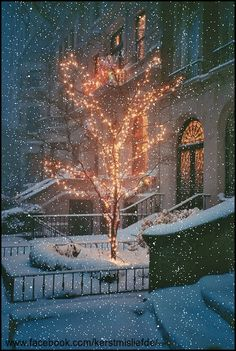 Tree with Christmas lights in the front yard of a mansion city house. I added the falling snow and a border to it. DF,