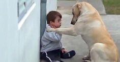 Dit filmpje laat de bijzondere band tussen dit jongetje en zijn trouwe huisdier zien. Honden zijn de meest trouwe dieren die er...