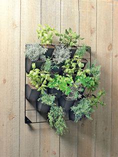 Vertical Wall Garden - Gardener's Supply Company. Hang near back door?