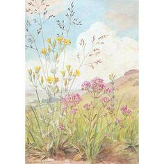 Margaret Tarrant - Perfoliate Yellow-wort and Common Centaury