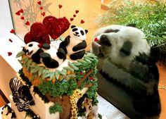 A panda cake and a panda