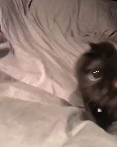 Cat Discover Im coming down from my mix/meth high When the mix & meth just kicked in. Funny Animal Videos, Cute Funny Animals, Cute Baby Animals, Animals And Pets, Cute Cats, Funny Cats, Kittens Cutest, Cats And Kittens, Photo Chat