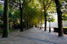 Árvores, Bruxelas, Bélgica