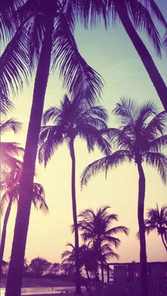 Palm trees sunset iphone wallpaper
