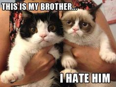 You cant hate him. you're both so cute! :) and 4 grumpy cat :(