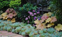 Love the combo of succulents and heucheras!   Great edging plants!