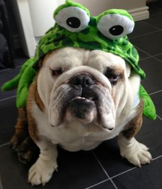"""But I don't wanna be a frog dog."""