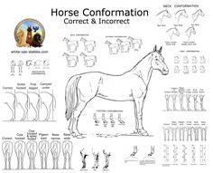 The most important role of equestrian clothing is for security Although horses can be trained they can be unforeseeable when provoked. Riders are susceptible while riding and handling horses, espec… Horseback Riding Lessons, Horse Anatomy, Horse Facts, Types Of Horses, Equestrian Outfits, Horse Training, Horse Care, Dressage, Horse Stuff
