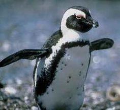 King penguin kidzone facts | Penguins | Pinterest | King, Animals ...