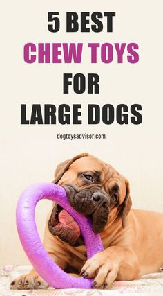Looking at the best dog chew toys for large breeds? Here are the 5 Best Toughest. - Looking at the best dog chew toys for large breeds? Here are the 5 Best Toughest, Durable Dog Toys - Funny Dog Toys, Big Dog Toys, Cute Dog Toys, Dog Chew Toys, Every Dog Breed, Big Dog Breeds, Modern Dog Toys, Large Dog Costumes, Durable Dog Toys
