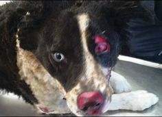 JUSTICE FOR CODY!!!! Applaud Jail Sentence for Man Who Burned Dog Alive! Such an extremely rare outcome in Ireland!  Please send words of praise for this EVOLVED JUDGE!  For years, individuals have escaped jail sentences for crimes against animals and, at one time, there simply were no reprimands in place to address animal welfare issues. Today, thanks to Judge David McFarland of Belfast's Crown Court, offenders can now expect to face the full power of the law. PLZ Sign and Share Widely!