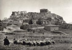 1903 ~ Sheep under the Acropolis of Athens (photo by Frederic Boissonnas) Greece Pictures, Old Pictures, Old Photos, Athens Acropolis, Athens Greece, Greece Art, Myconos, Greek History, Athens History