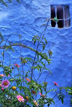 Chefchaouen, Morocco flowers against a wonderful blue wall. Vert Turquoise, Blue City, Blue Dream, World Of Color, Blue Aesthetic, Blue Walls, Color Photography, Belle Photo, Shades Of Blue