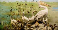 ΜΟΝΙΜΗ ΕΚΘΕΣΗ ΦΥΣΙΚΗΣ ΙΣΤΟΡΙΑΣ | Μουσείο Γουλανδρή Φυσικής Ιστορίας Natural History, Bird, Nature, Animals, Naturaleza, Animales, Animaux, Birds, Animal