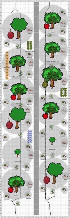 Garden Plan - 2015: Forest garden beds 1+2