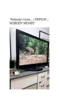 Crazy Funny Memes, Really Funny Memes, Silly Memes, Pet Memes, Seriously Funny, Funny Animal Jokes, Funny Animal Videos, Cute Funny Dogs, Cute Funny Animals