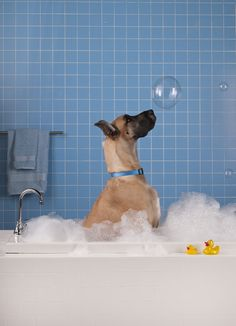 Wet Dog Wednesday: HALF PRICE baths for daycare campers.http://www.campcanineflorida.com/#dogdaycare #catdaycare #campcanine