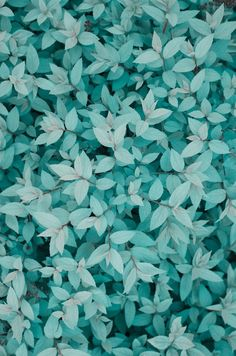 musts:  Leaves by Alex Pelikh