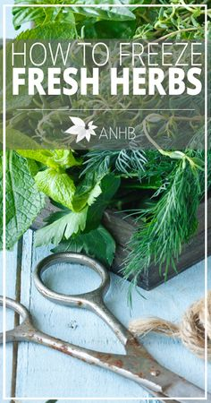 How to Freeze Fresh Herbs - All Natural Home and Beauty