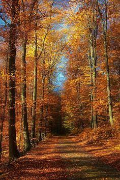 Autumn path (Brandenburg, Germany) by Dietrich Bojko Photographie Seasons Of The Year, Best Seasons, Fall Pictures, Pretty Pictures, Beautiful World, Beautiful Places, Autumn Scenes, Belle Photo, Pathways