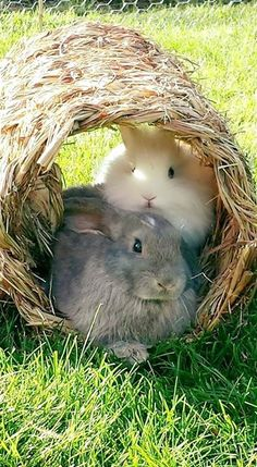 Bunnies in their hideout
