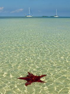 Bahama Scene by Leon Heyns  Starfish in very shallow water with sailboats in the distance. Taken at Tahiti beach, Abaco, Bahamas