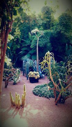 Jardin de Majorelle | حديقة ماجوريل in مراكش, Marrakech-Tensift-Al Haouz