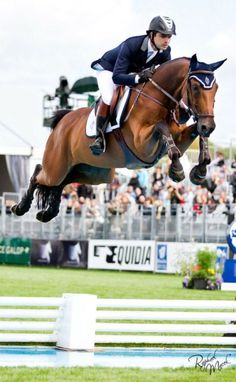 Hunter jumper eventing horse equine grand prix dressage equestrian.............LOOK AT THOSE KNEES!!!!!!!!