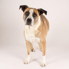 Lovey is a sweet old girl who is available for adoption at our Mission campus!