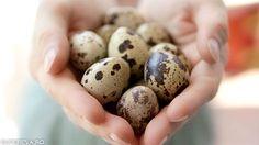 Eggs, Cartoon Network, Youtube, Egg, Youtubers, Youtube Movies, Egg As Food