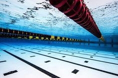 Swimming, What a Wonderful Sport (Video)
