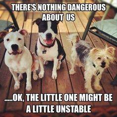 30 Funny animal captions - part 44 (30 pics)