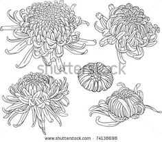 set of black and white isolated vector chrysanthemum flower blossoms. Cool for t-shirts, tattoos and design. - stock vector