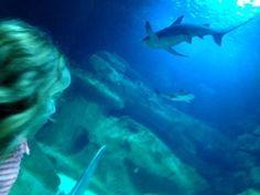 Un requin du grand aquarium de Paris