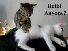 """jajajajajaja """"Reiki cats"""" #Reiki"""