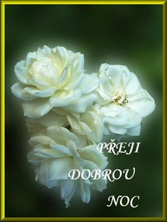 Good Morning Wishes, Good Night, Rose, Flowers, Facebook, Fotografia, Nighty Night, Pink, Roses