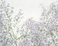 This flower photograph features a field of light purple asters. I love the dreamy nature of this photo.    To view PRICING select SIZE using