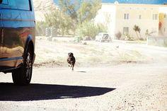 Voce á deve ter presenciado um cachorro metido a corajoso correndo atrás de uma moto ou de um carro. Mas por que os cães têm essa atitude? De acordo com o psicólogo canino Bruno Leite, da clínica Terapeuta de Cães, tudo não passa de instinto.