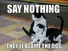ROFL! You know that your cat wishes that there was always a dog to blame!