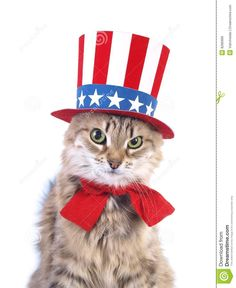 Patriotic Pets | More similar stock images of ` Cute patriotic cat `