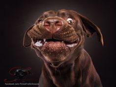 """Doping fürs Herz: Christian Vielers Bilder von Hunden, die nach Leckerchen schnappen, gingen um die Welt. Neben den """"Snapshots - Dogs Catching Treats"""" entstehen in seinem Studio starke Charakterportraits. Hundefotografie mit Charme und Augenzwinkern."""