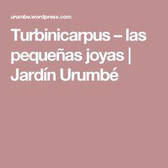 Turbinicarpus – las pequeñas joyas    Jardín Urumbé