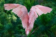 Angel (looks like the back of a roseate spoonbill)