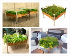 ECO-IDEAS Y RECICLAJE : PLANTAS.