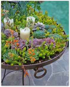 Recycled fire pit with succulents and candlelight!